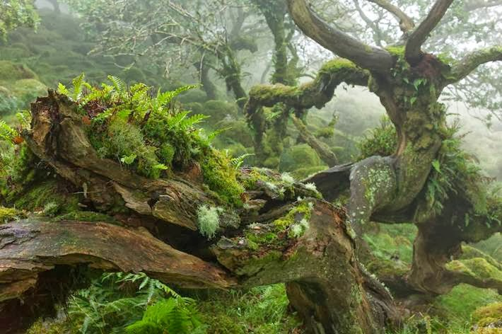 Mystic wild forest of Dartmoor National Park, England.