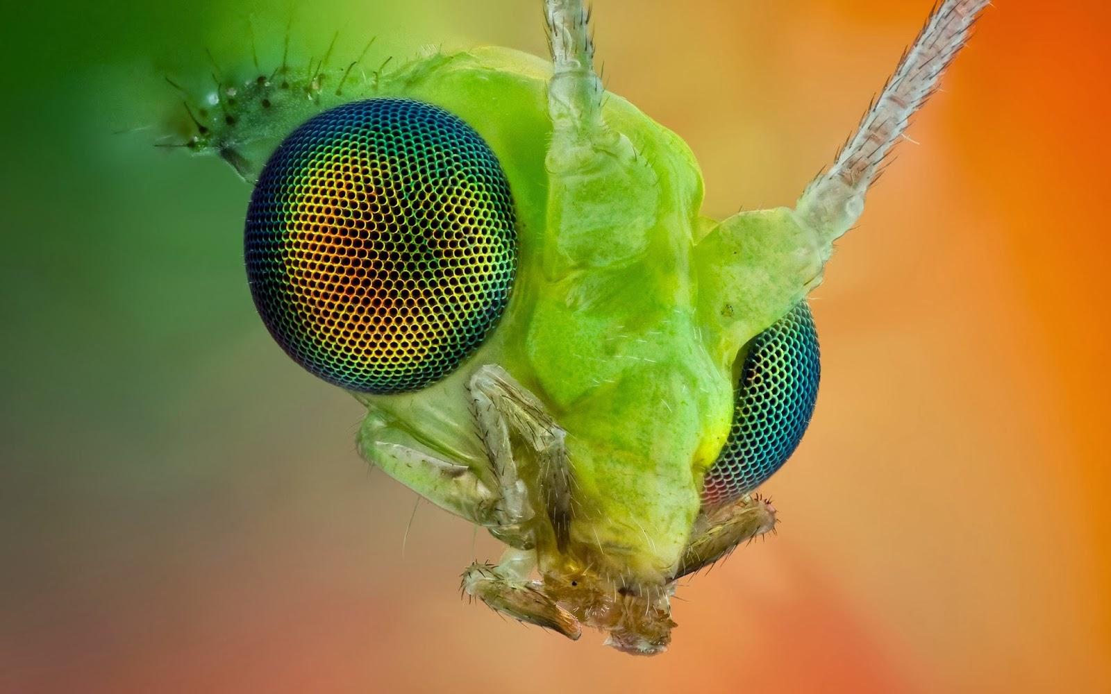 HD Wallpapers Desktop: Insects HD Wallpaperas