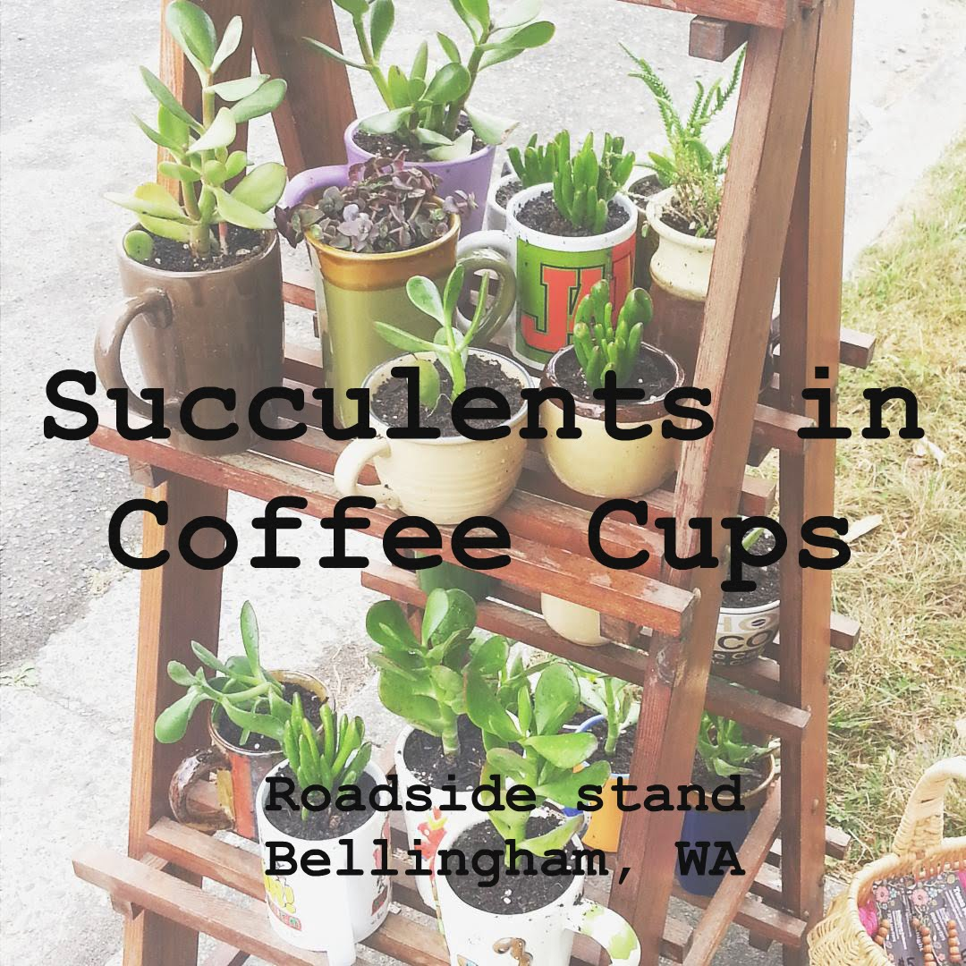 Get your succulent in a coffee cup!
