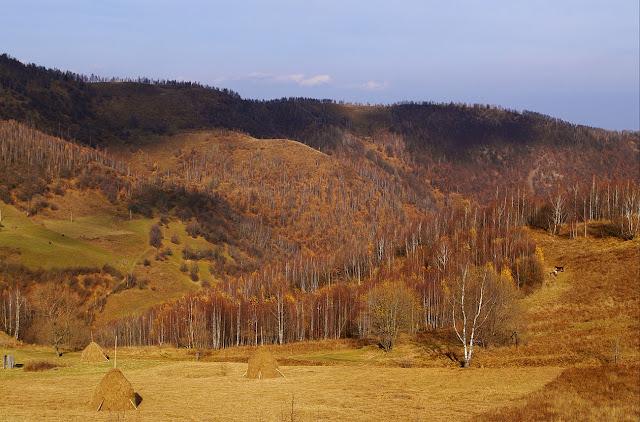 poze frumoase toamna autumn image