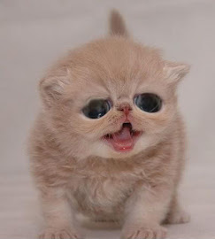 Kitty Cutee @_@