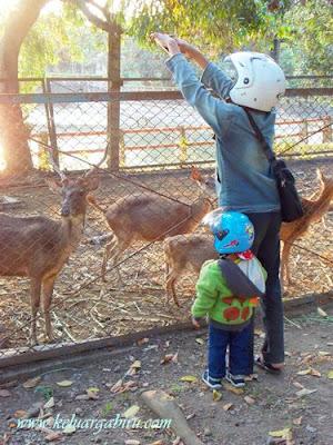 Rusa di Taman Wisata Bendung Lodoyo