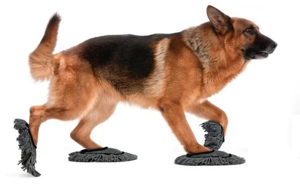 Zapatos Limpiadores Para Mascotas Productos Innovadores Mc