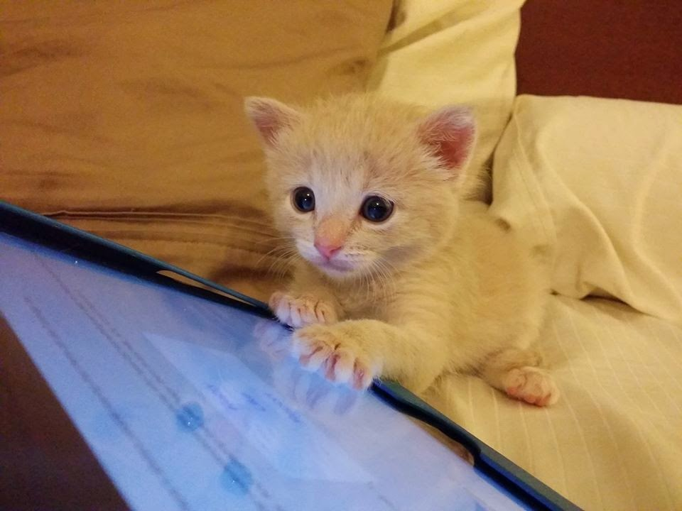 Funny cats - part 99 (40 pics + 10 gifs), cat pictures, kitten playing with tablet