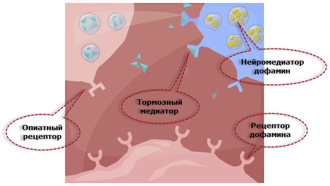 Влияние на опиоидные рецепторы мозга электрических сигналов или импульсов