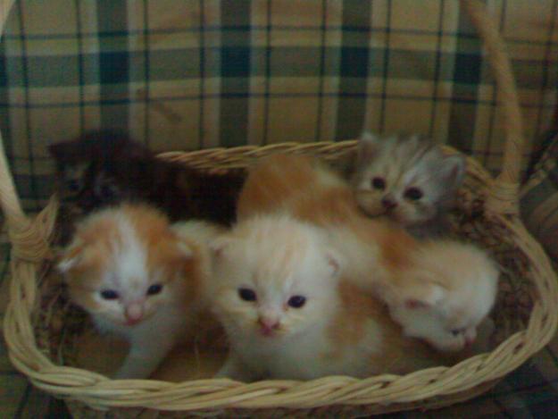 6 Cara Mudah Merawat Anak Kucing Ocim Blog Berita