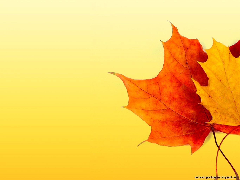 Fall Colors Background   WallpaperSafari