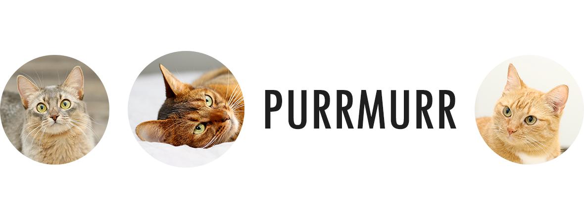 Purrmurr
