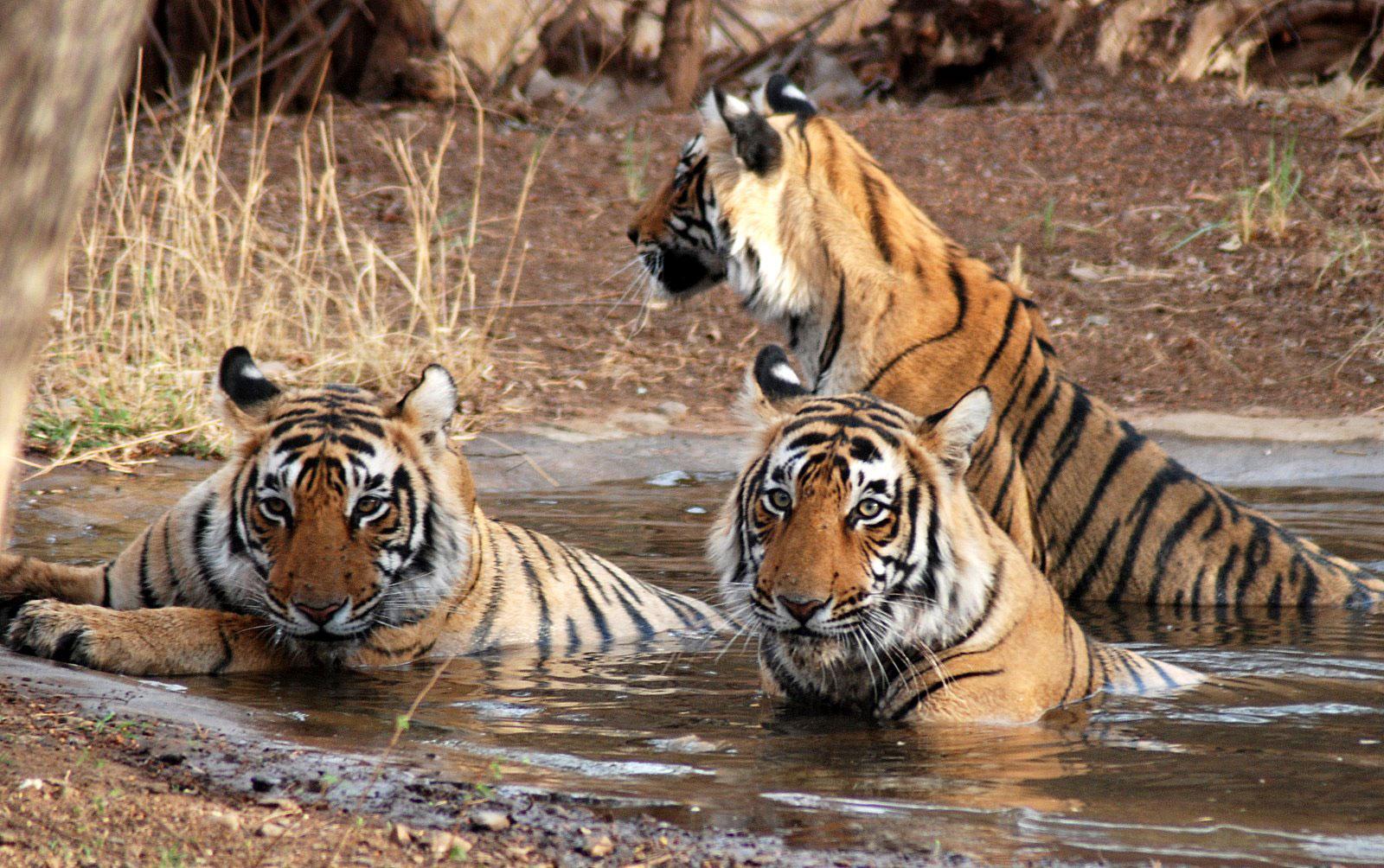 Keoladeo National Park Rajasthan