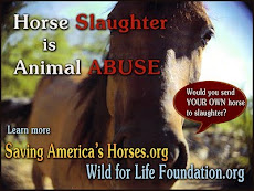 Horse Slaughter is Animal Abuse