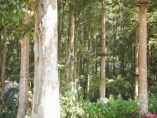 Treetop Adventure at Kebun Raya Bali
