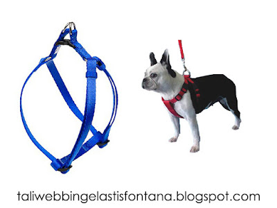 harness dog strap