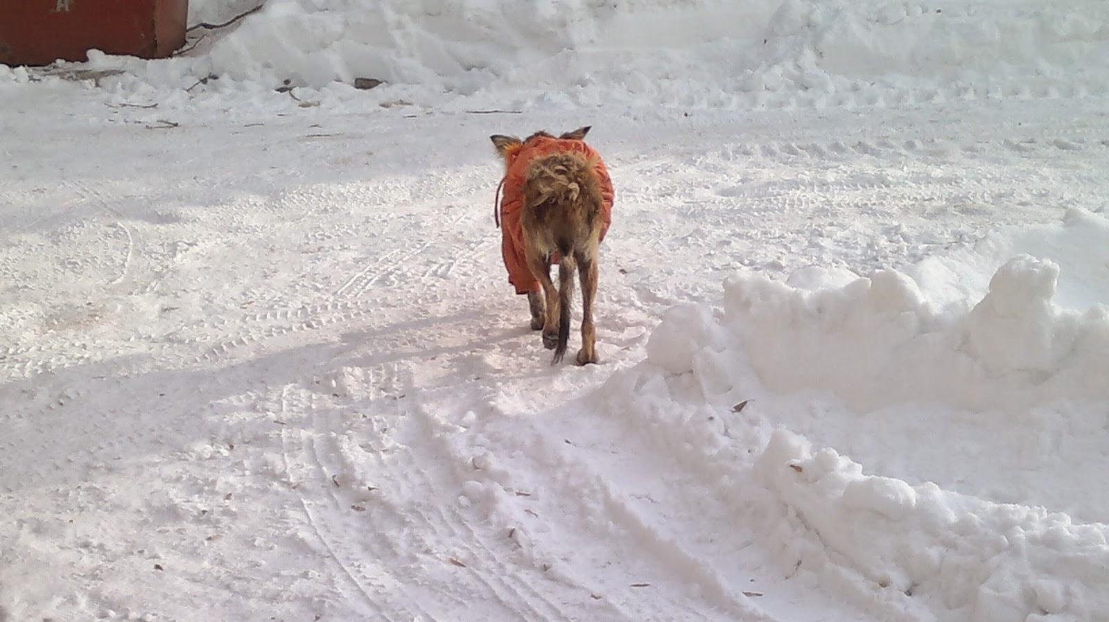 Бездомным животным холодно зимой