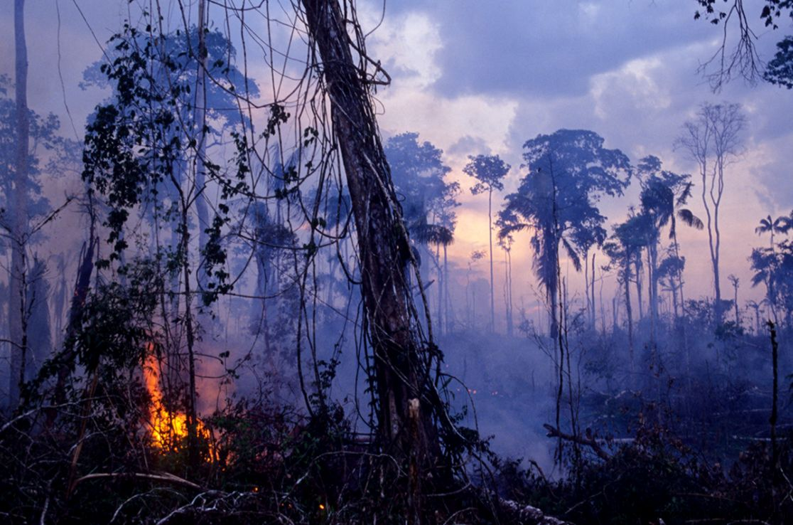 What if the Amazon rainforest was completely destroyed
