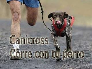 correr perro canicross