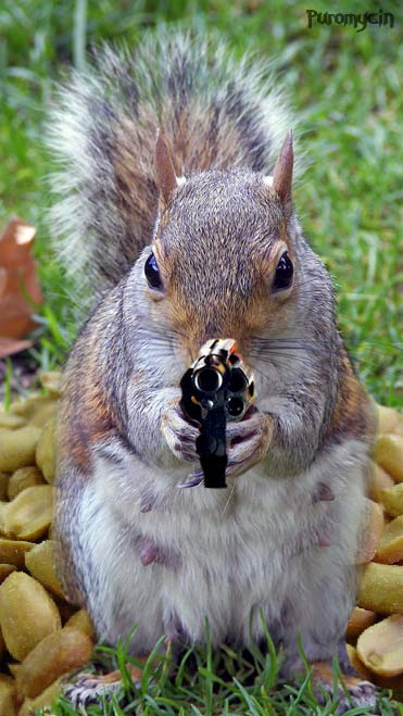 Funny Squirrels with Guns-New Funny Photos Collection ...