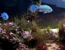 Biocube Reef Aquarium