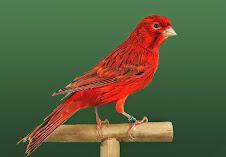 Agata Rojo