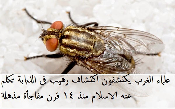 معجزة فى الذباب اثبتها الرسول محمد منذ 14 قرنا