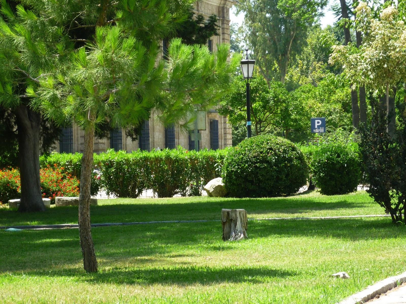 Arte y jardiner a las sombras en el jard n for Arbustos con flores para jardin