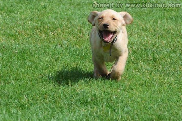 http://3.bp.blogspot.com/-NvbtOwpBnps/TXzEnhtWq3I/AAAAAAAAREQ/TW7e4FtHqk0/s1600/these_funny_animals_635_640_20.jpg