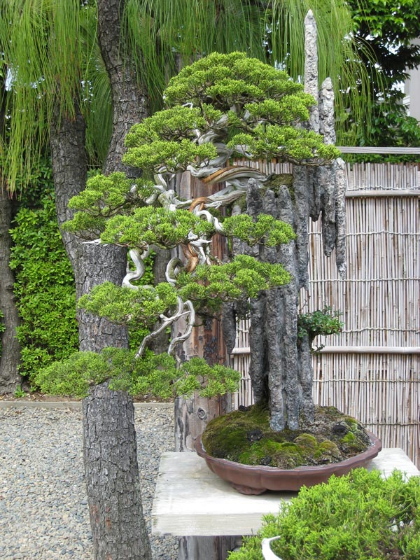 nostromo bonsai jardin de kimura parte ii. Black Bedroom Furniture Sets. Home Design Ideas