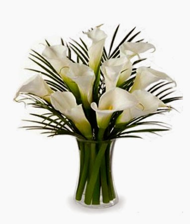 bloomex-white-calla-lilies