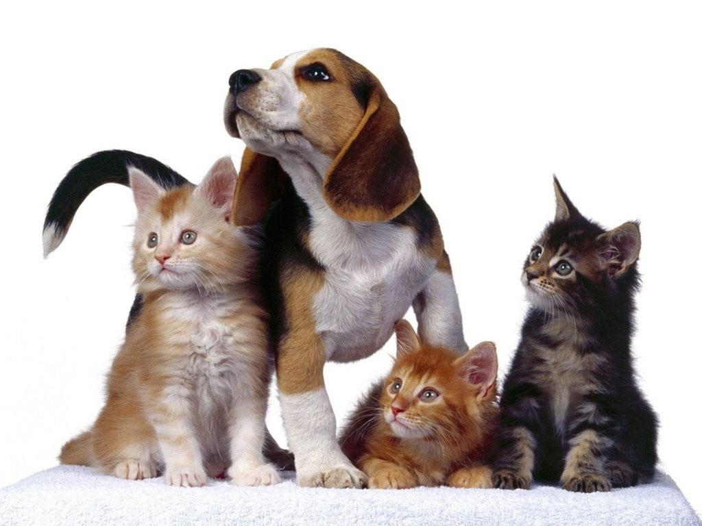 http://3.bp.blogspot.com/-Nw0hLBAJa6I/TcwBezDpxYI/AAAAAAAAM24/yNQlnW9bRxo/s1600/cats-wallpapers-8.jpg
