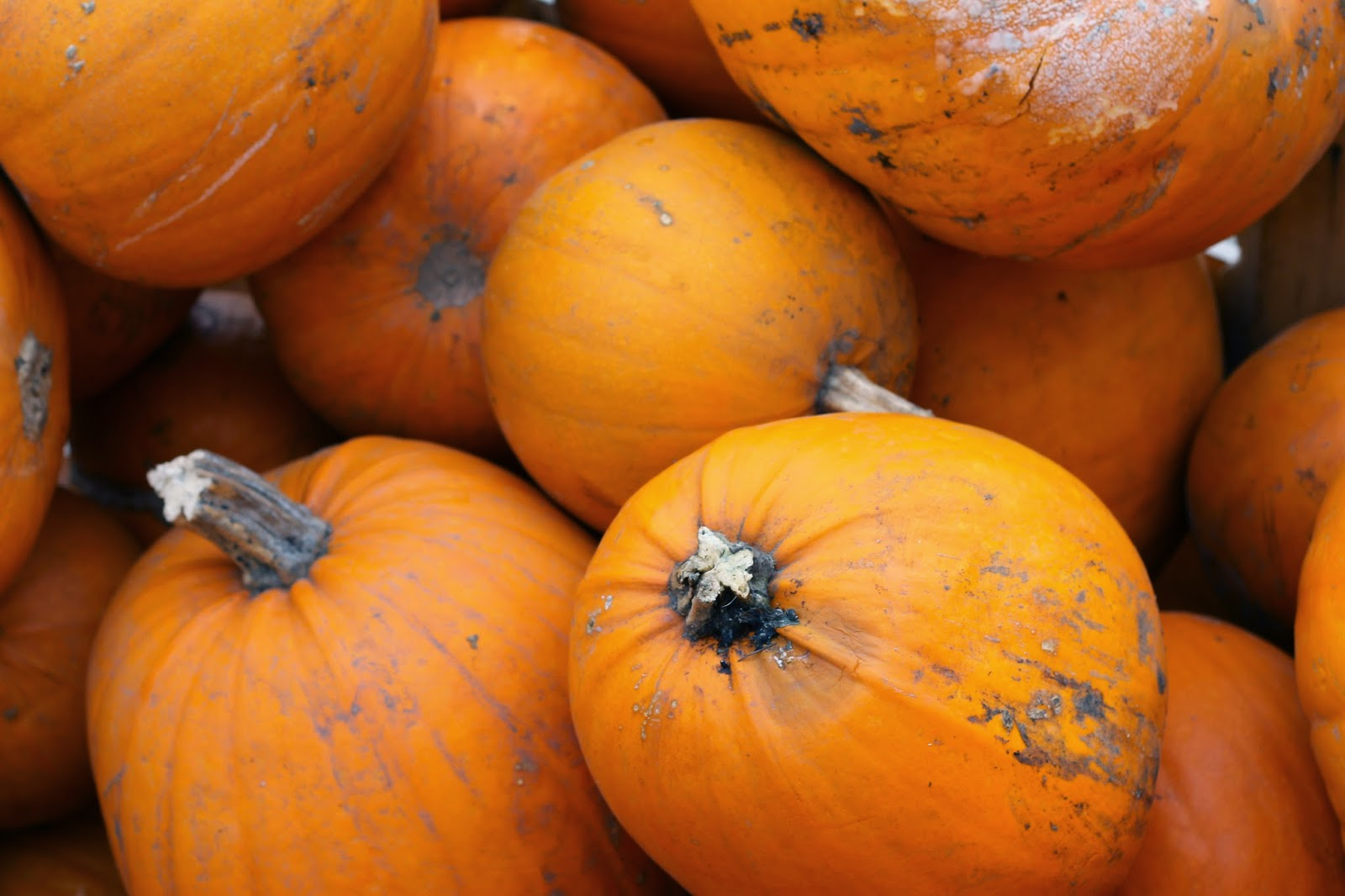 Apley Farm Pumpkins