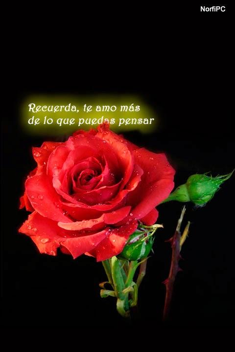 Ver Imagenes De Todo Tipo De Rosas - 60 fotografías de las flores más hermosas del mundo