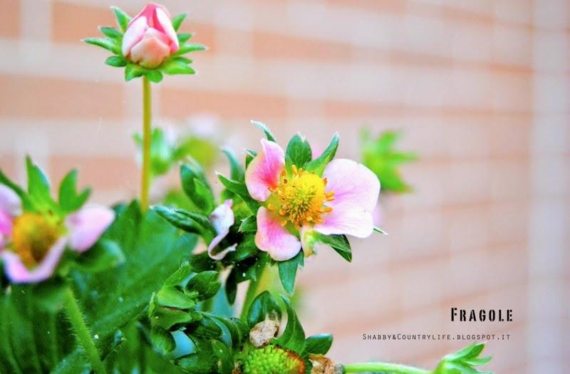 Fragole - Creare un' accogliente zona giardino [ work in progress ] - Shabby&CountryLife.blogspot.it