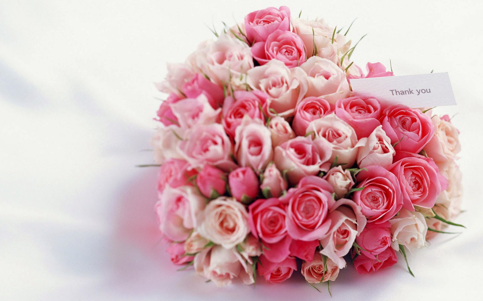 pure pink rose bouquet - photo #5