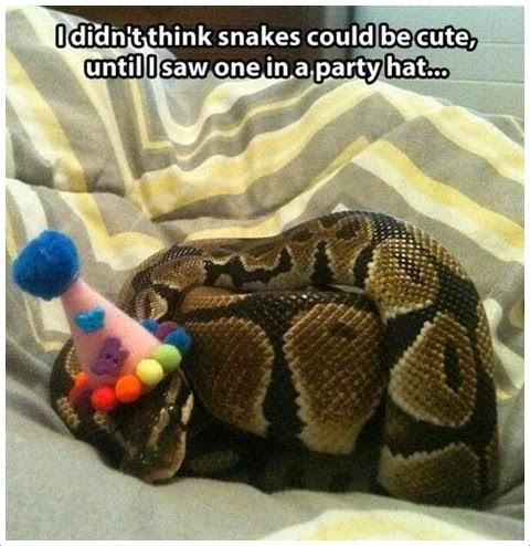 Cute Snake Cute snake
