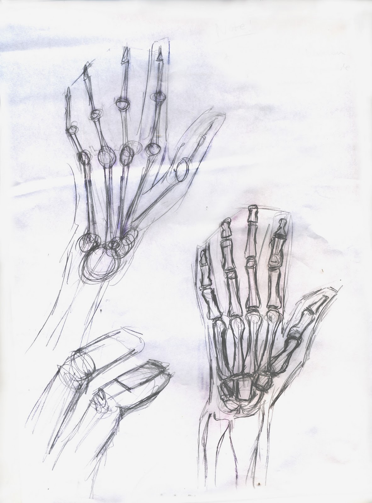 Dunno what to call it blog....: anatomy sketches