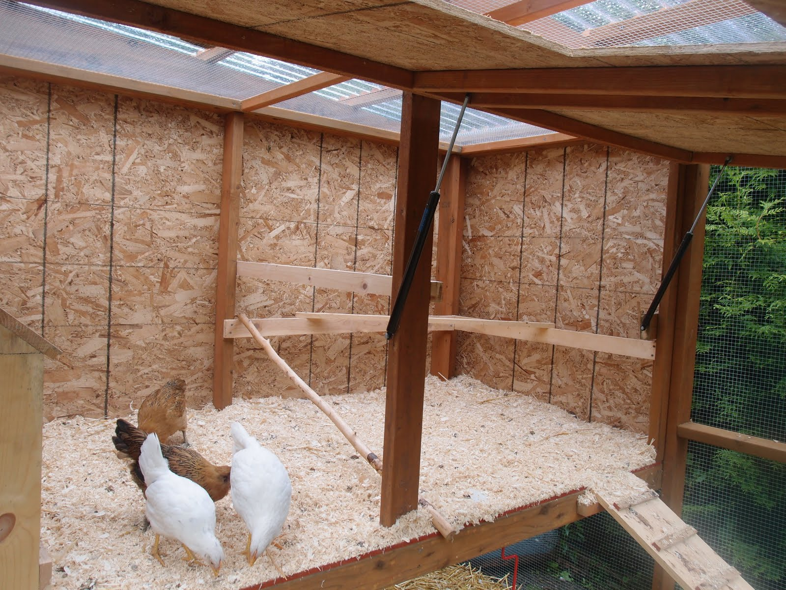 The chicken coop is done enough northwest edible life for Chicken coop interior designs