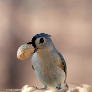 bird with food