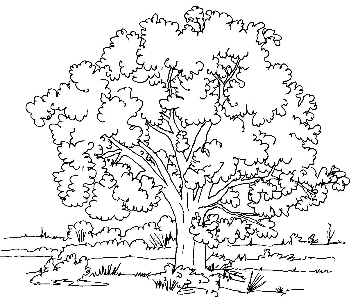 Дятел на дереве раскраска