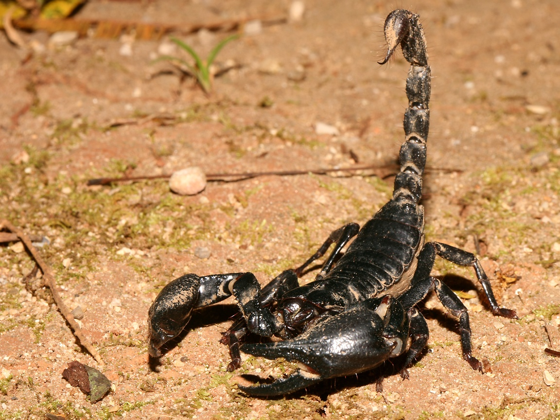 Labels carnivore scorpion
