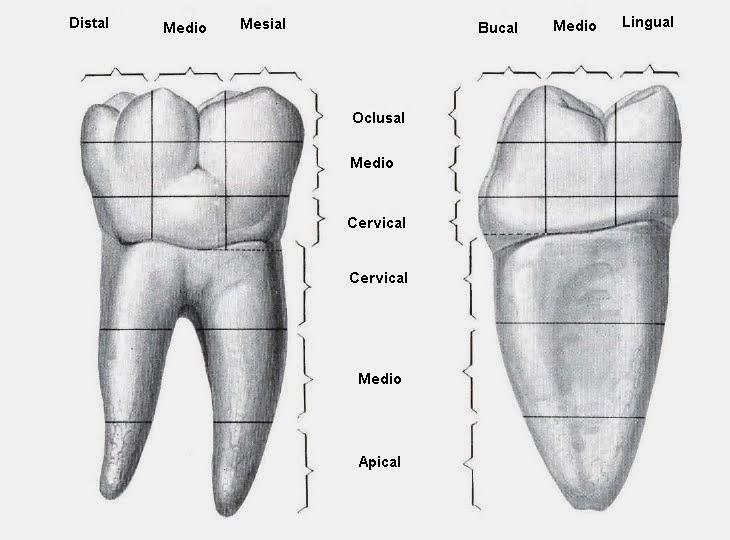 Tcnicas ayuda odontolgica y estomatolgica 2013