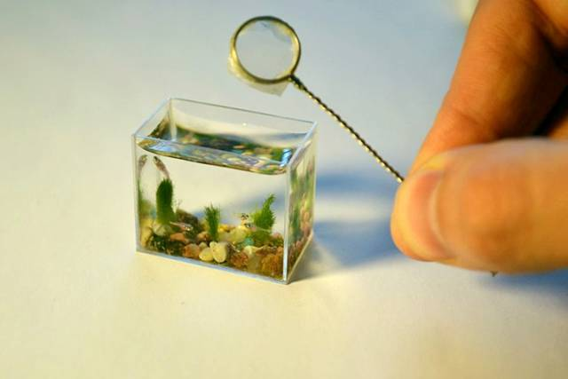 smallest aquarium in the world