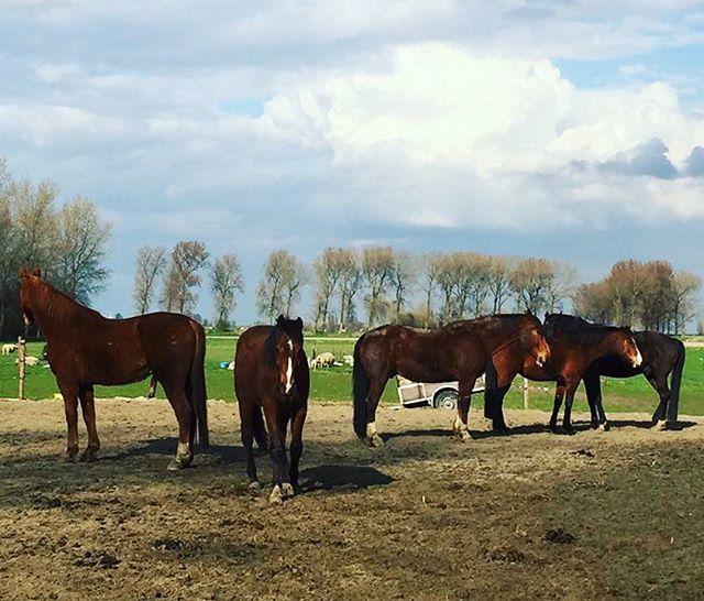 Paardenvoeders - krachtvoer