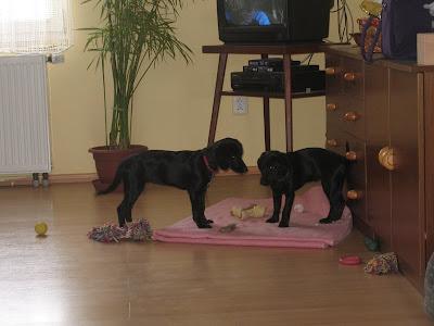 Britney a Mia v obýváku na dece