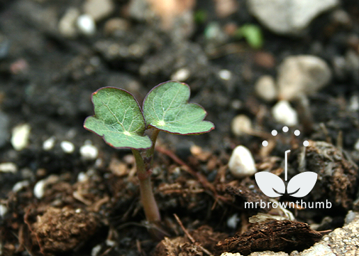 how to sow small and large seeds