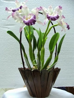 orquideas cuidados