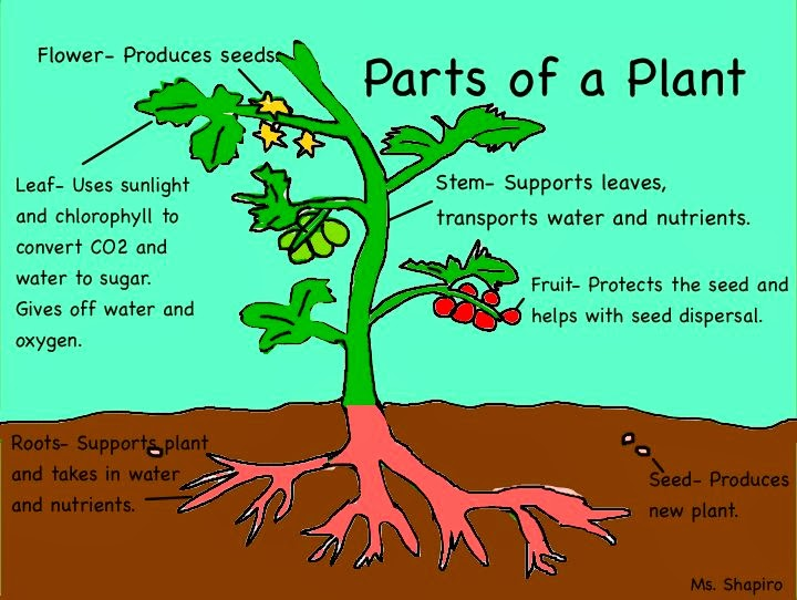 SCIENCE BLOG. YEAR 4: PARTS OF PLANTS