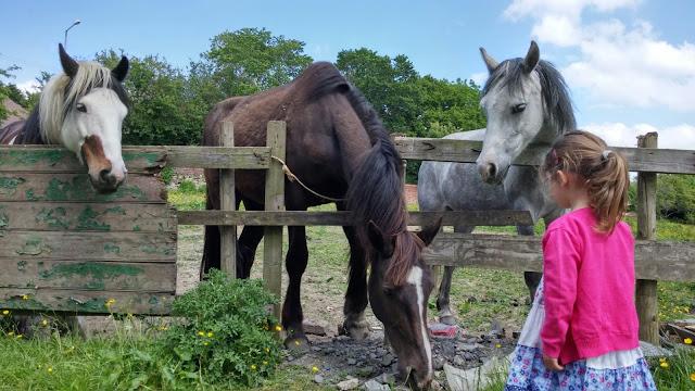meeting 3 horses