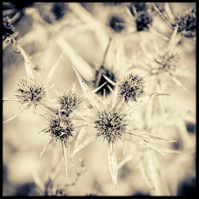 http://davidtello.blogspot.com.es/