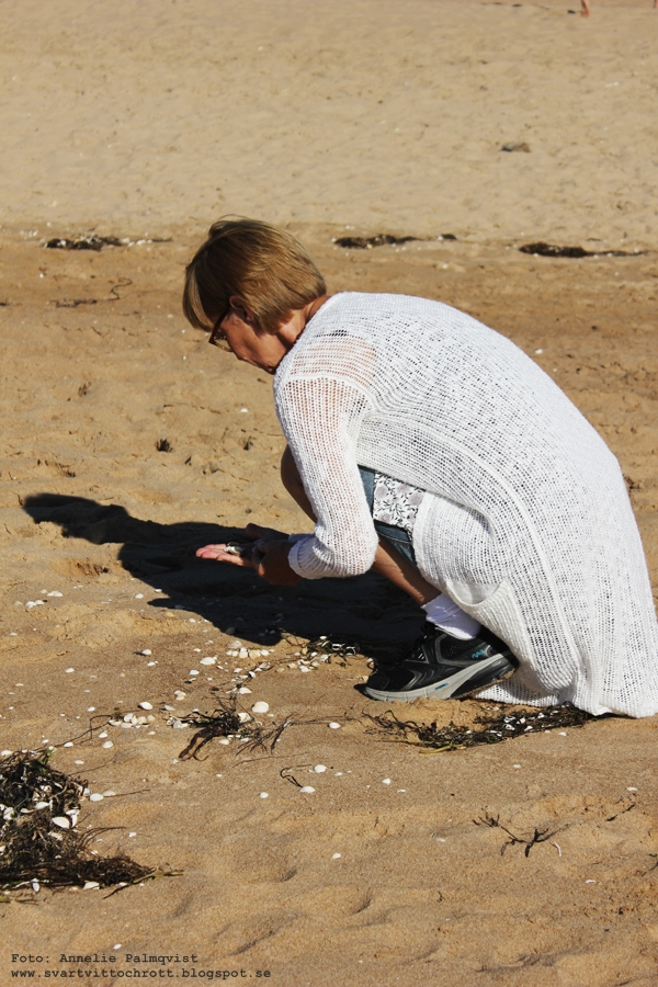 snäckor, halmstad, strand tylesand, kock off tylebäck