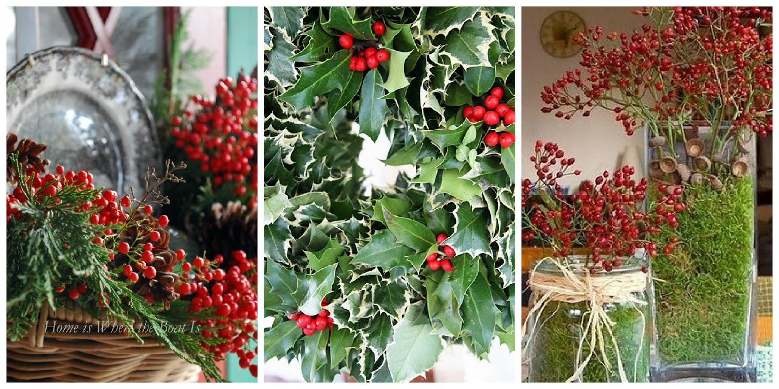 Tra orto e giardino piante invernali capodanno con i fiori for Piante invernali