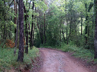 Camí sota la Carena i a prop de la Riera de Sant Julià